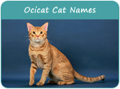 Ocicat Cat Names
