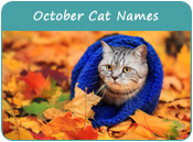 October Cat Names