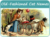 Old-Fashioned Cat Names