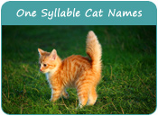 One Syllable Cat Names