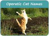 Operatic Cat Names
