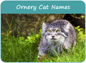 Ornery Cat Names