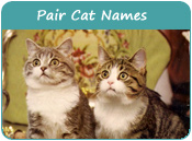 Pair Cat Names