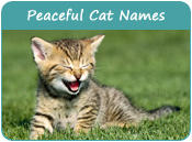 Peaceful Cat Names