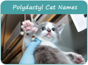 Polydactyl Cat Names