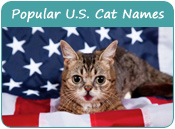 Top U.S. Cat Names