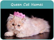 Queen Cat Names