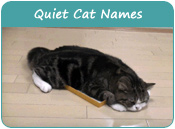 Quiet Cat Names