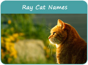 Ray Cat Names