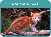 Red Cat Names