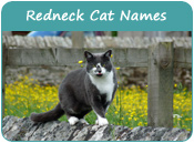 Redneck Cat Names