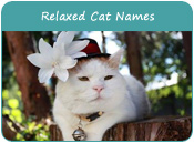 Relaxed Cat Names