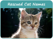 Rescued Cat Names