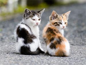 Twin Cat Girls