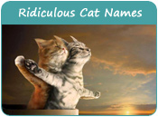 Ridiculous Cat Names