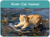 River Cat Names