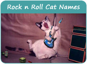 Rock n Roll Cat Names