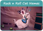 N Cat Names Cat Names Categories