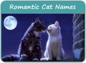 Romantic Cat Names