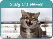 Sassy Cat Names