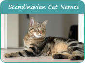 Scandinavian Cat Names
