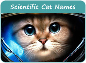 Scientific Cat Names