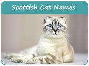 Scottish Cat Names