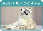 Scottish Fold Cat Names
