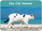 Sea Cat Names