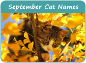September Cat Names