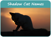 Shadow Cat Names