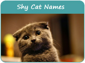 Shy Cat Names