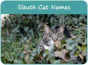 Sleuth Cat Names