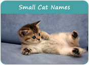 Small Cat Names