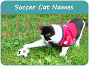 Soccer Cat Names