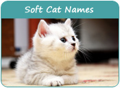 Soft Cat Names