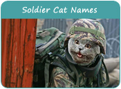 Soldier Cat Names