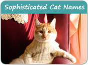 Sophisticated Cat Names