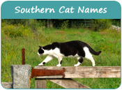 Southern Cat Names