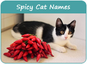 Spicy Cat Names