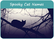 Spooky Cat Names