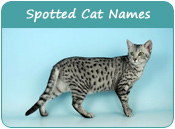 Spotted Cat Names