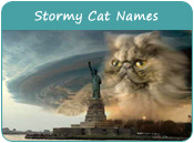 Stormy Cat Names