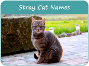 Stray Cat Names