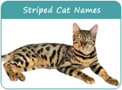 Striped Cat Names