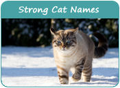 Strong Cat Names