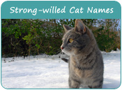 Strong-willed Cat Names
