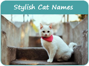 Stylish Cat Names