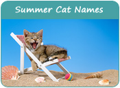 Summer Cat Names