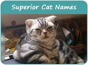 Superior Cat Names
